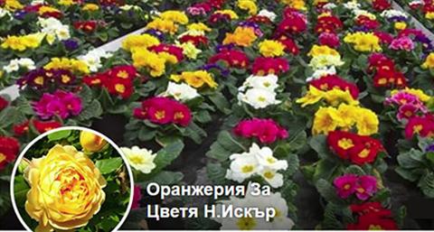 Декоративна растителност Еврис ООД