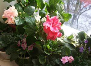 Стайните цветя през февруари