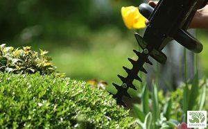 Жив плет градина бг