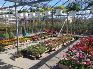 Уникални градини от Земен Рай ЕООД