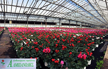 Производството на интериорни и екстериорни растения, фирма Albanidis - северна Гърция