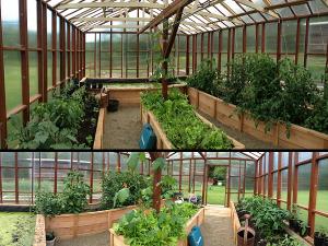 Собствени зеленчуци в оранжерии и парници
