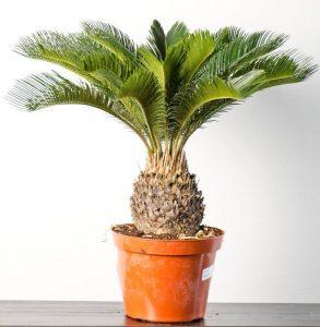 палми на закрито