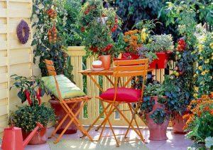 Чери домати на терасата