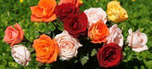 разноцветни рози