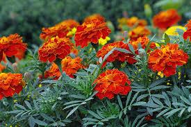 Typтa – билкa и красиво цвете.