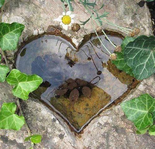 Каменно сърце