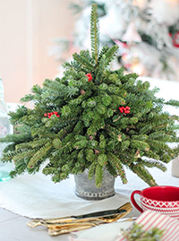 Рождественска елха