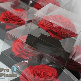 Вечни рози в кутии