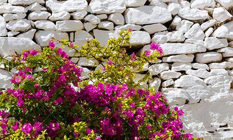 Каменна ограда Градина БГ