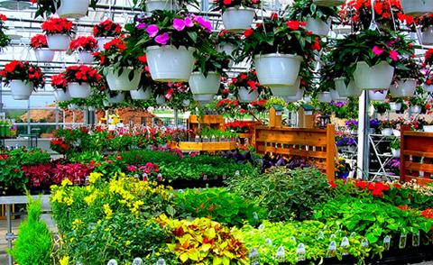 Градински център Цветя Цветница - градински и стайни цветя